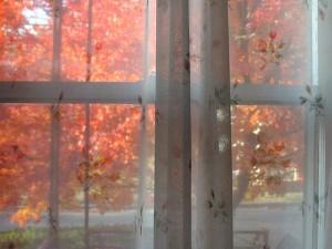 window veil